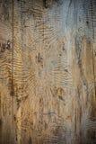 Texture de scarabée d'écorce Photo libre de droits