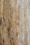 Texture de scarabée d'écorce Photo stock
