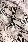 Texture de serpent Photographie stock