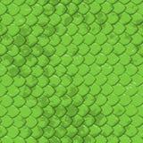 Texture de serpent de limette - sans joint Image stock