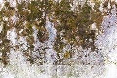 Texture de surface en béton couverte de la mousse Image stock