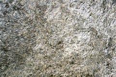 Texture de tapis gris de tissu Image stock