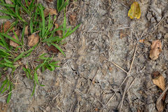 Texture de terre avec l'herbe Image stock
