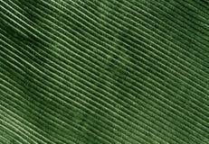 Texture de tissu de couleur verte avec le modèle Photos libres de droits
