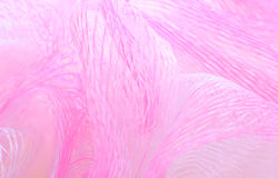 Texture de tissu de maille Photo libre de droits