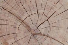 Texture de tronçon. Photo libre de droits