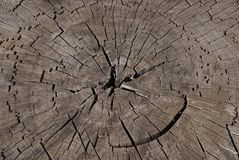 Texture de tronçon d'arbre  photo libre de droits