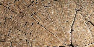 Texture de tronçon d'arbre Photos libres de droits
