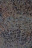 Texture de tronçon d'arbre Image libre de droits