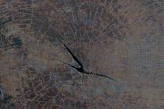 Texture de tronçon d'arbre Photographie stock libre de droits