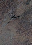 Texture de tronçon d'arbre Photo stock