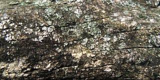 Texture de tronçon Vieux fond criqué de conseil Texture en bois Fond en bois de frontière de sécurité Milieux mystiques Photographie stock libre de droits