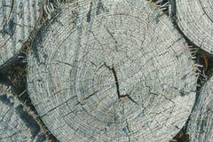 Texture de tronçons d'arbre Photographie stock