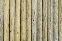 Texture de tronçons d'arbre Image libre de droits