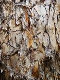 Texture de tronc avec l'écorce endommagée Photo libre de droits
