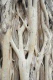 Texture de tronc d'arbre images stock