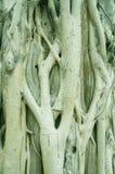 Texture de tronc d'arbre photographie stock