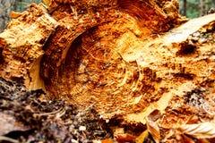 Texture de tronc du ` s d'arbre photographie stock