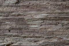 Texture de vieil arbre en bois Photos libres de droits