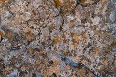 Texture de vieille pierre avec l'élevage de mousse Photographie stock