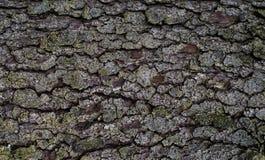 Texture de vieux bois Photo stock