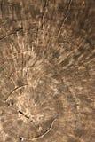 Texture de vieux bois de teck Photographie stock