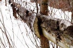 Texture de vieux fond en bois de barrière Images libres de droits