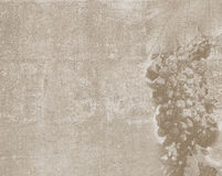 Texture de vintage avec le croquis de raisin Photographie stock