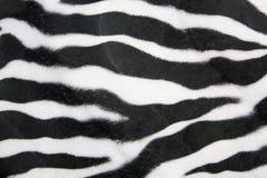 Texture de zèbre Photo libre de droits