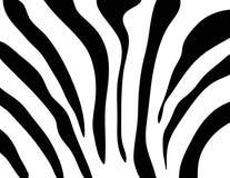 Texture de zèbre noire et blanche Photos libres de droits