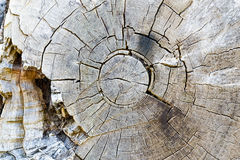Texture of Decayed Tree Rings Royalty Free Stock Photos