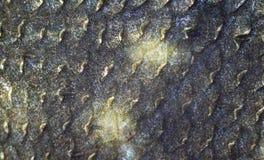 Texture des échelles de poissons Photo stock
