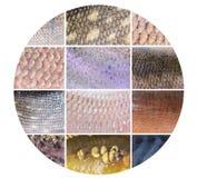 Texture des échelles de poissons Photos stock