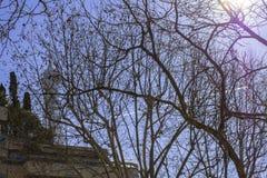 Texture des branches contre le ciel bleu sur lequel il y a une trace de l'avion images libres de droits