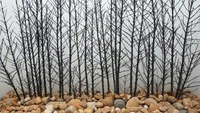 Texture des branches sèches avec le plancher de pierres sur le fond blanc Photos libres de droits