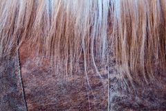 Texture des cheveux des femmes et des manteaux de peau de mouton photographie stock