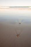 Texture des coquilles de sable et de mer de plage Photos libres de droits