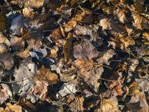 Texture des feuilles au sol Photo libre de droits