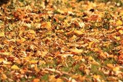 Texture des feuilles oranges d'autmn Photo libre de droits