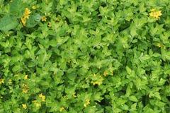Texture des feuilles vertes Images stock