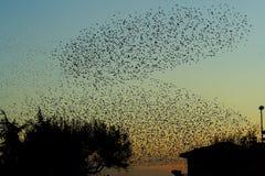 Texture des oiseaux Image stock