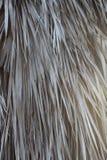 Texture des palmettes sèches Image libre de droits