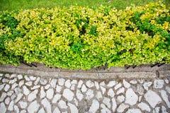 Texture des pavés ronds et les buissons et l'herbe verts Photos stock