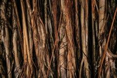 Texture des putréfactions élevées dans la forêt tropicale Image libre de droits