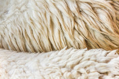 The texture design with fleece Royalty Free Stock Photo