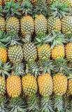Texture design with Pineapple. Stock Photos