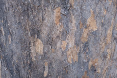 A texture and detail of wood bark. A fine detail background for abstract design Royalty Free Stock Photography