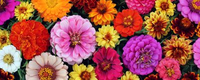 Texture of different garden flowers. Good backdrop for a greeting or postcard. Floral background, top view. The texture of different garden flowers. Good stock photography