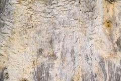 Texture of a dirty surface an old tree Stock Photography