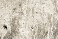 Texture of a dirty surface an old tree Royalty Free Stock Images